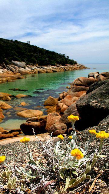 Fairy Cove, Wilson's Promontory National Park, Victoria, Australia