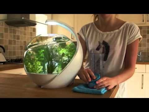17 best images about betta fish on pinterest betta fish for Avo fish tank