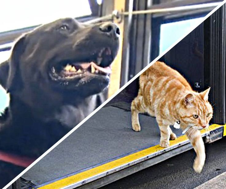 Seattle dog figures out buses, starts riding solo to the dog park! Cat owner in England surprised to find cat regularly catches bus. To read more about these commuting pets - click here: http://asite.link/6gj & http://asite.link/6gk
