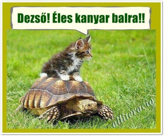 humoros, aranyos, állatos, képek, cica, teknős,