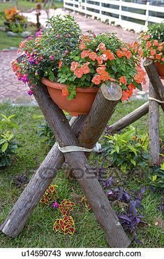 Flowers canned laying on wooden shelf in garden Stock Photography – Dingus Mcklingus