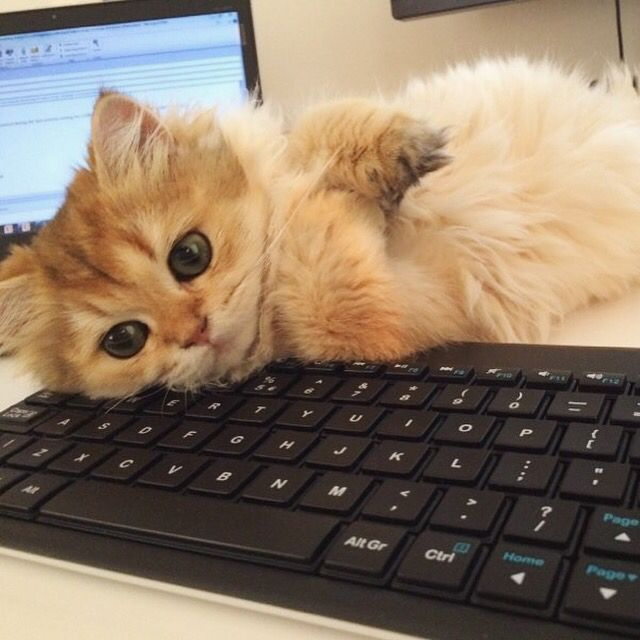 What are you trying to do? Work?