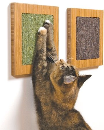 Cat Scratch Fever | Modern Cat magazine