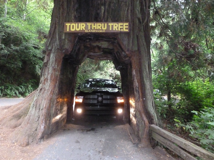 everyone must try to drive through a tree...especially in a truck.