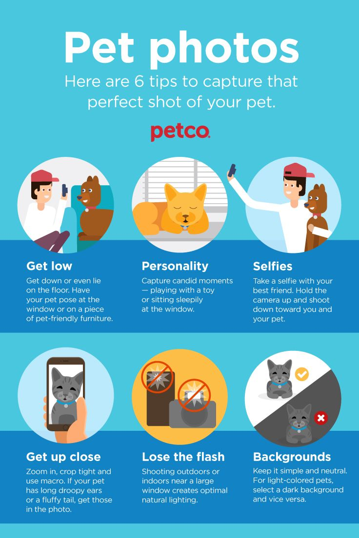 Pin By Petco On Celebrating With Your Pet Your Pet Cat Diet Dry Cat Food