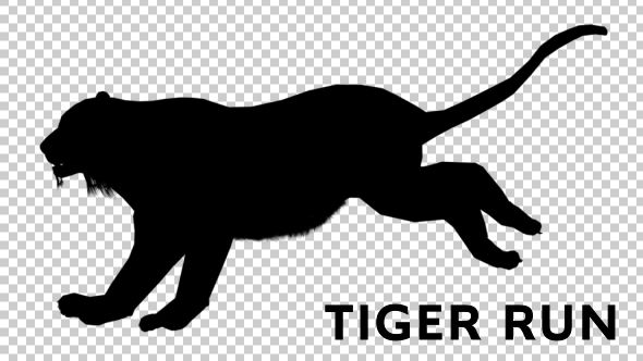 biology, cat, ecology, howl, hunt, hunting, mammal, move, predator, silhouette, tiger