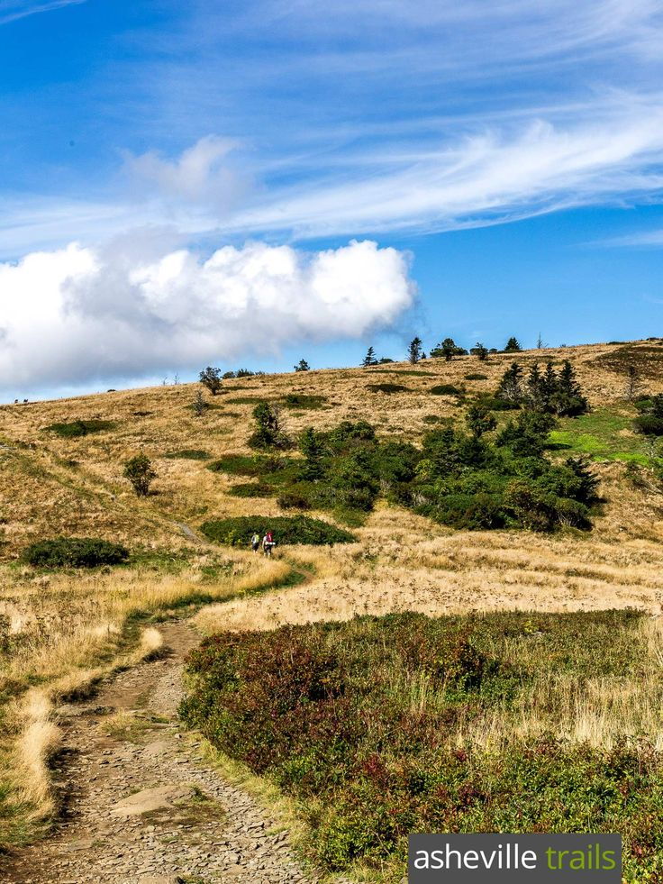 Hike the Appalachian Trail to Grassy Ridge Bald from Carvers Gap at Roan Mountain in NC