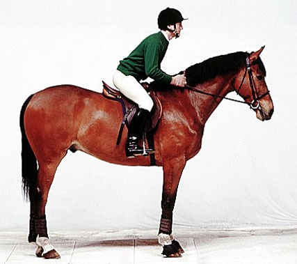1000+ images about Correct Riding - 49.1KB