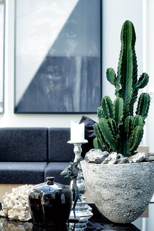 love these textures, cactus, glass candle stick, cement pot, etc.
