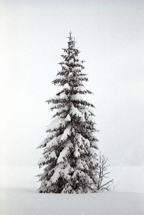 wintertime2.jpg (600×896)