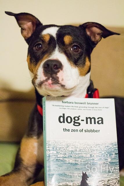 Books On Training Australian Cattle Dogs
