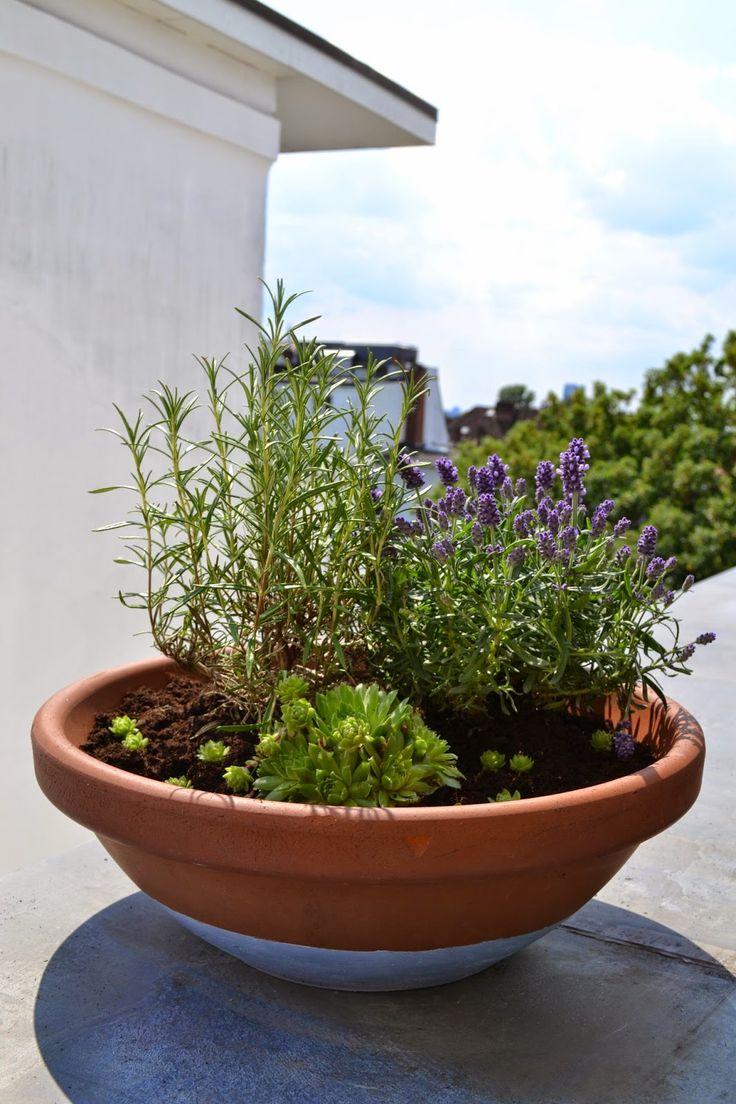 DIY: Pflanzschale mit Lavendel, Rosmarin und Sukkulente