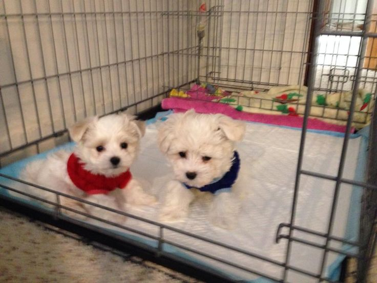 Potty Training Puppy Apartment Reviews