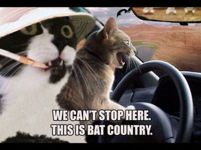We can't stop here. This is bat country.