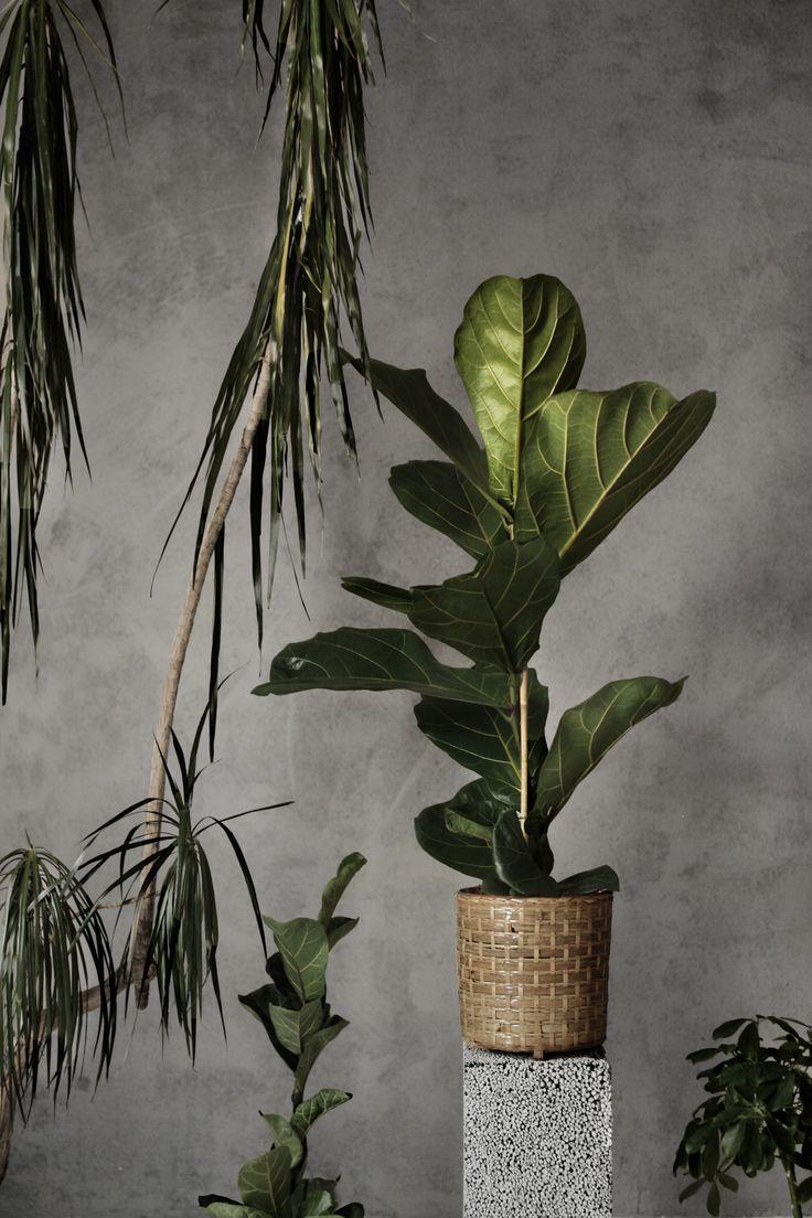 Jungle Photography: Tim Kiukas Instagram: timphoto