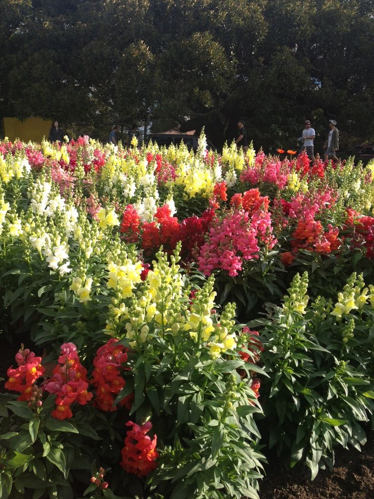 Beautiful flowers at the Auckland Botanical Gardens