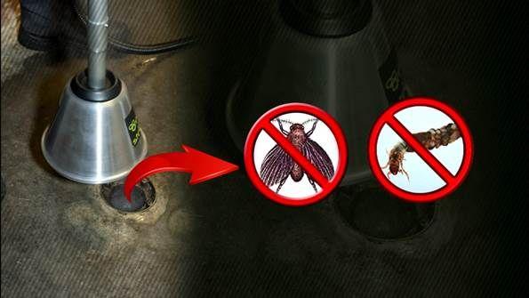 fruit flies drain flies how to get rid