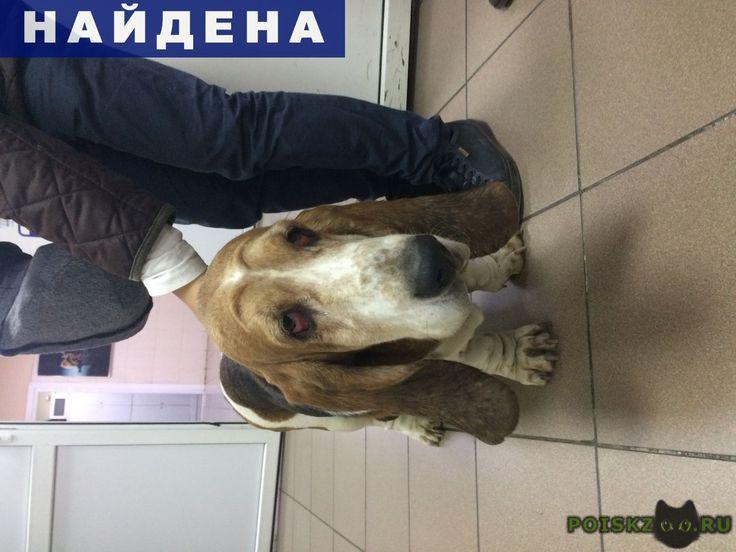 Найдена собака бассет-хаунд, г.Владивосток http://poiskzoo.ru/board/read32002.html  POISKZOO.RU/32002 .. октября в районе ж/д вокзала, г. Владивосток около .. была найдена собака породы бассет-хаунд. Девочка, старше .. лет. Собачка с ошейником, домашняя, добродушная. Ищем хозяев  РЕПОСТ! @POISKZOO2 #POISKZOO.RU #Найдена #собака #Найдена_собака #НайденаСобака #Владивосток
