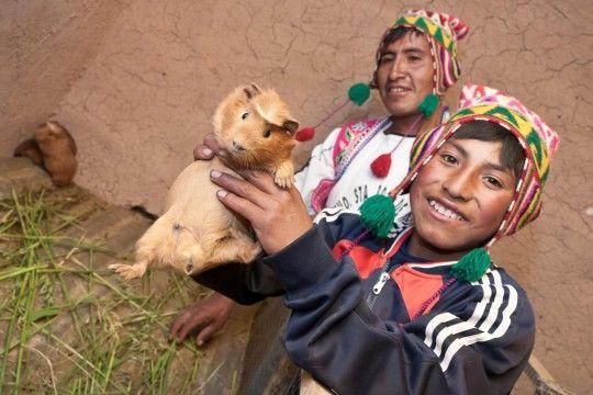 60 Millionen Meerschweinchen für den Kochtopf Vergessen Sie argentinisches Steak, chilenischen Wein oder mexikanischen Tequila! Denn der neue Star heißt Peru – ein Land mit atemberaubender Ressourcenvielfalt und Freude am Experimentieren.