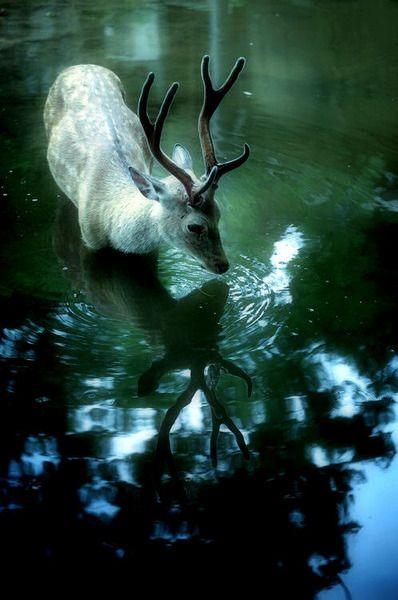 Boire à l'ombre de la forêt                                                                                                                                                                                 Plus
