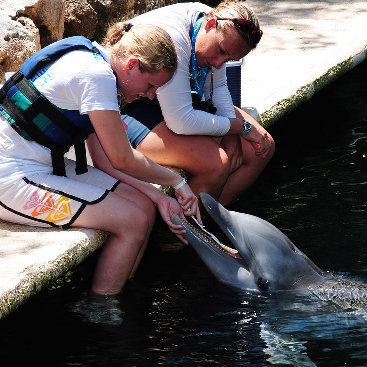 Trainer for a Day at Delphinus - Brushing a dolphins teeth