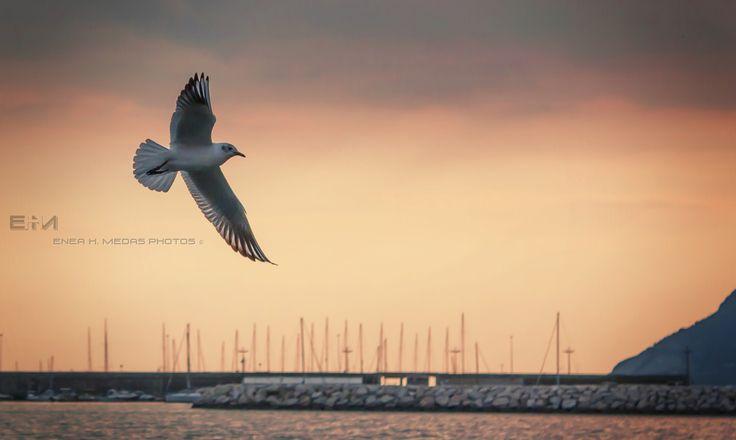 """Gliding - www.facebook.com/enea.mds """"Chi tiene un uccello in gabbia ruba alla natura un tassello della sua armonia."""" """"Who keeps a caged bird steals a piece of nature and its harmony."""""""
