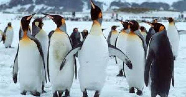 Οι πιγκουίνοι της Ανταρκτικής απειλούνται από την κλιματική αλλαγή