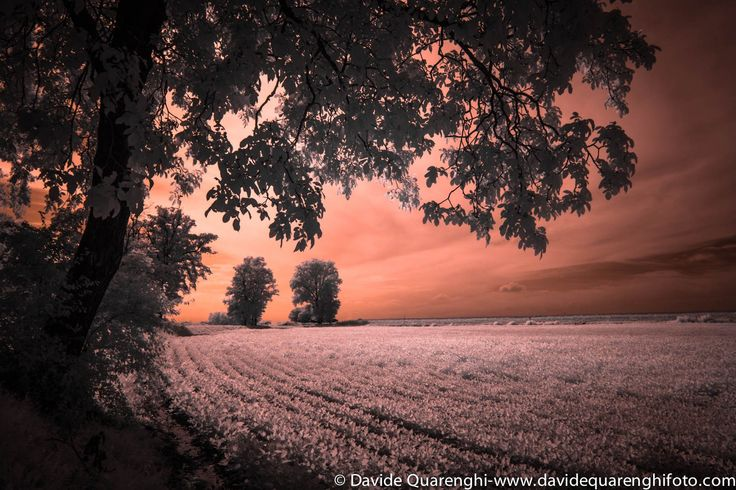 Another day is gone ... Cremona, Italy by Davide Quarenghi on 500px