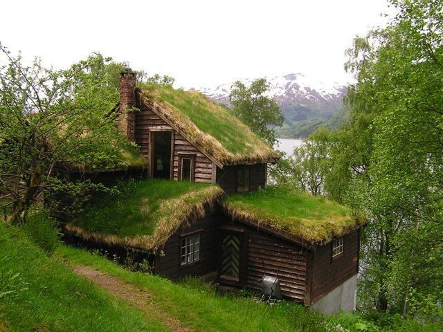 528 Best Images About Green Roofs On Pinterest Iceland