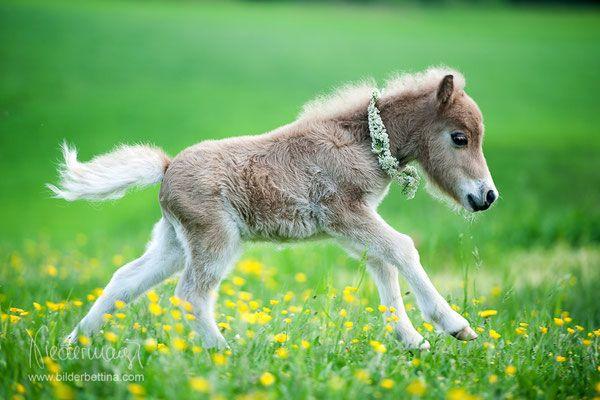 Malvorlagen mandala pferd pferde mandala als pdf zum kostenlosen herunterladen. Fohlen (mit Bildern)   Fohlen, Süßeste haustiere ...