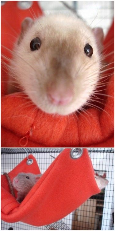 DIY Rat Fleece Hammock or for Other Small Animals. I had rats as pets (and they were great pets) and had them in a ferret cage with a plastic material hammock that you couldn't wash so this would have been ideal. Tutorial from craft nectar here.