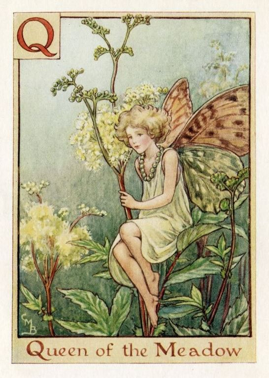 This beautiful Queen of the Meadow Alphabet Flower Fairy Vintage Print by Cicely Mary Barker was printed c.1940 and is an original book plate from an early Flower Fairy book. Cicely Barker created 168 flower fairy illustrations in total for her many books.
