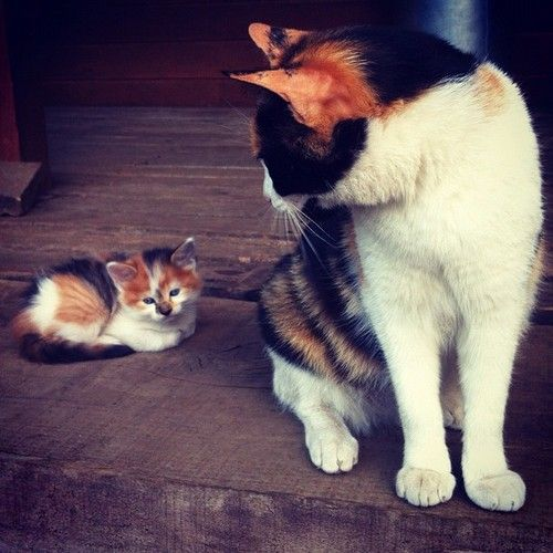 Adorable orange black and white kitten and mom