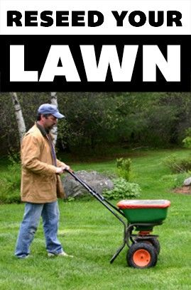 After a long summer of hot weather your lawn can look tired and worn out. Heat, foot traffic, drought and pet damage take their toll. However, you can revive your lawn and prepare it for the coming cold months by fertilizing and reseeding.