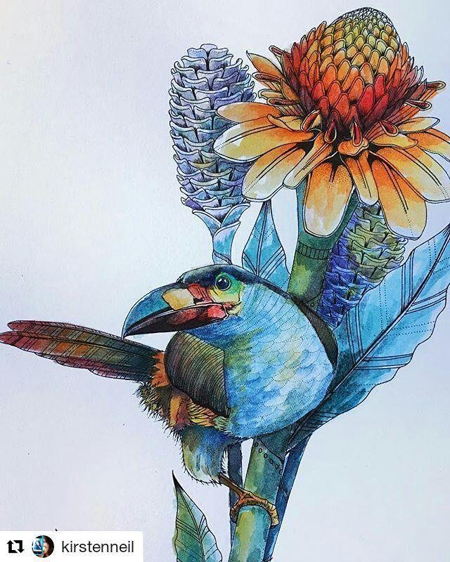 Daisy Fletcher Fletcherdaisy Instagram Photos And Videos Animorphia Coloring Book Millie Marotta Coloring Book Bird Coloring Pages