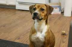Image result for Beagle pit
