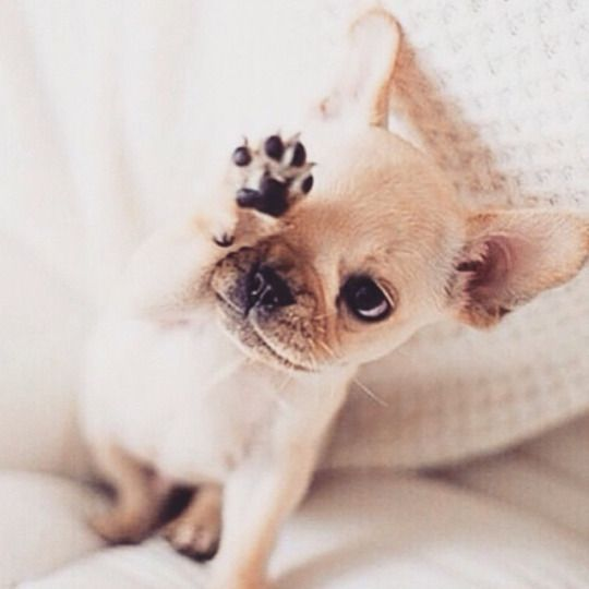 Such a cute little puppy, I'd give him a high five!