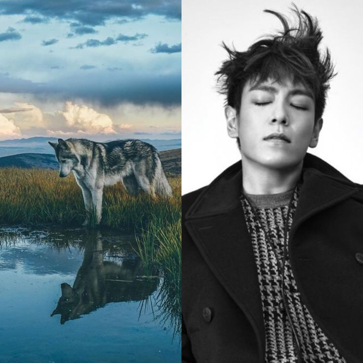 CelticAnimalZodiac&KPOP // Wolf // Top of BigBang