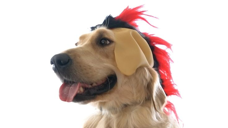 punk dog - Markiplier