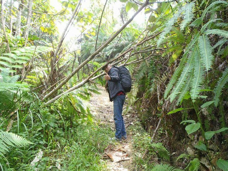 Trekking in Bukit Tigapuluh National Park