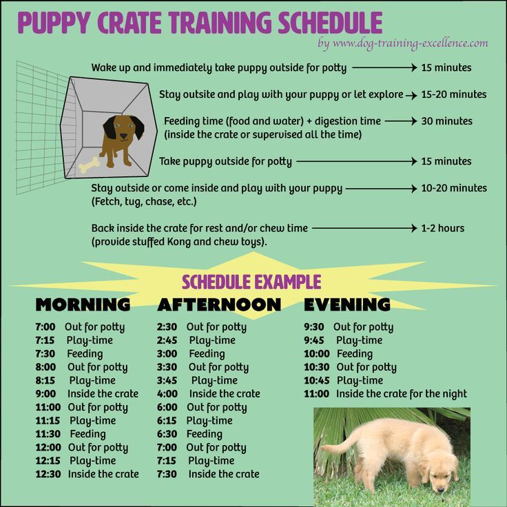 Free printable puppy crate training schedule! The best
