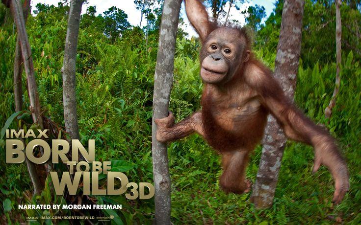 Watch Streaming HD Born to be Wild, starring Birute Galdikas, Daphne Sheldrick, Morgan Freeman, Chris Fries. N/A #Documentary #Short #Adventure http://play.theatrr.com/play.php?movie=1680059