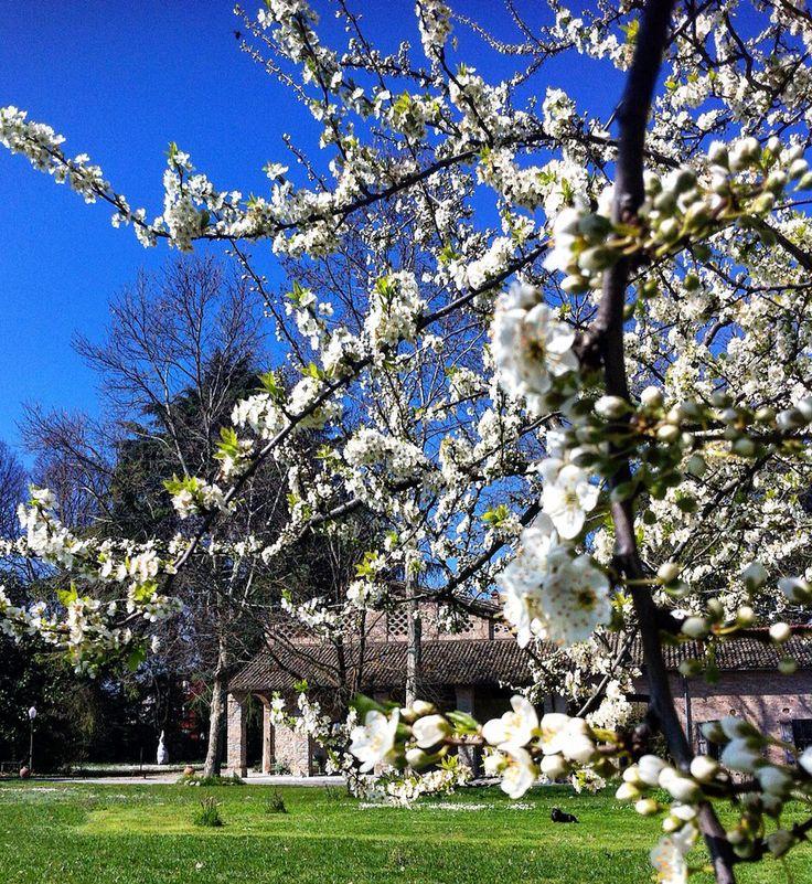 Assaggio di primavera #spring is coming
