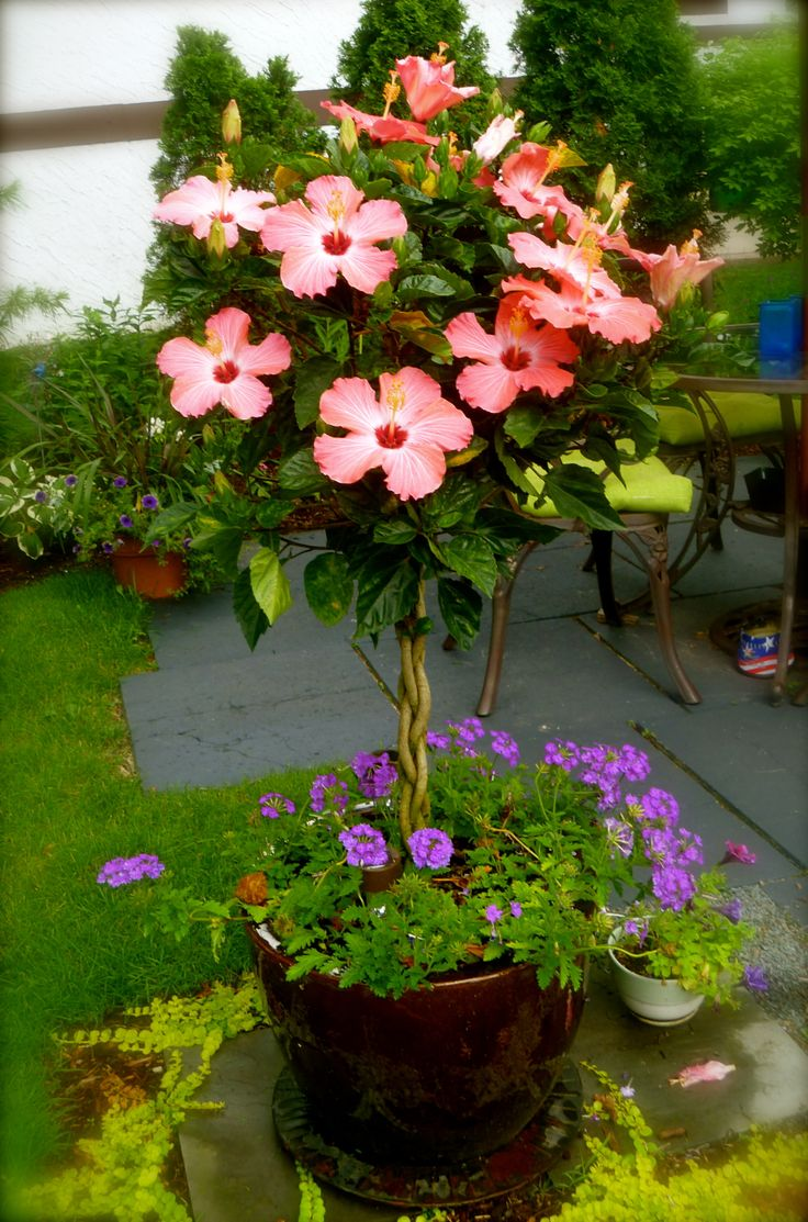 28 Best Plants For Fl West Pensacola Images On Pinterest Exotic Flowers Gardening And