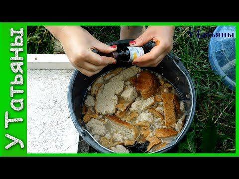 Подкормка из хлеба и йода для растений! Хлебная подкормка с йодом для огурцов, томатов и растений. - YouTube