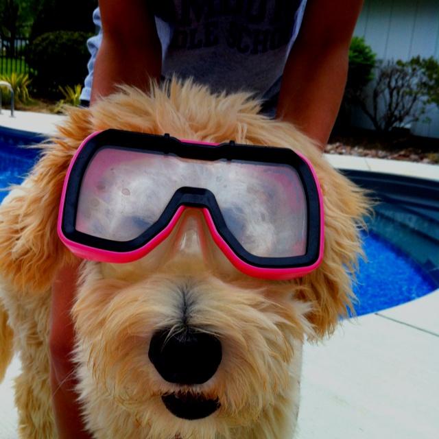 Bodi, the aqua dog.Aqua Dogs