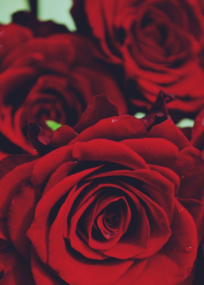 Bau De Confeitos Rosas Flores Arreglos Florales