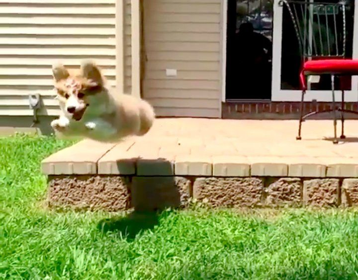 This Magical Superhero Puppy Will Inspire You to Reach For the Stars