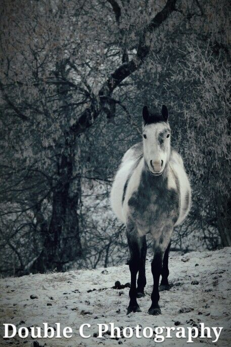 Phil and the frost # paint #horse #winter