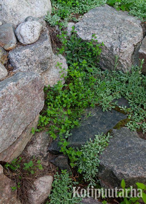 Portaat voivat olla myös pari askelmaa luonnonkivistä. www.kotipuutarha.fi